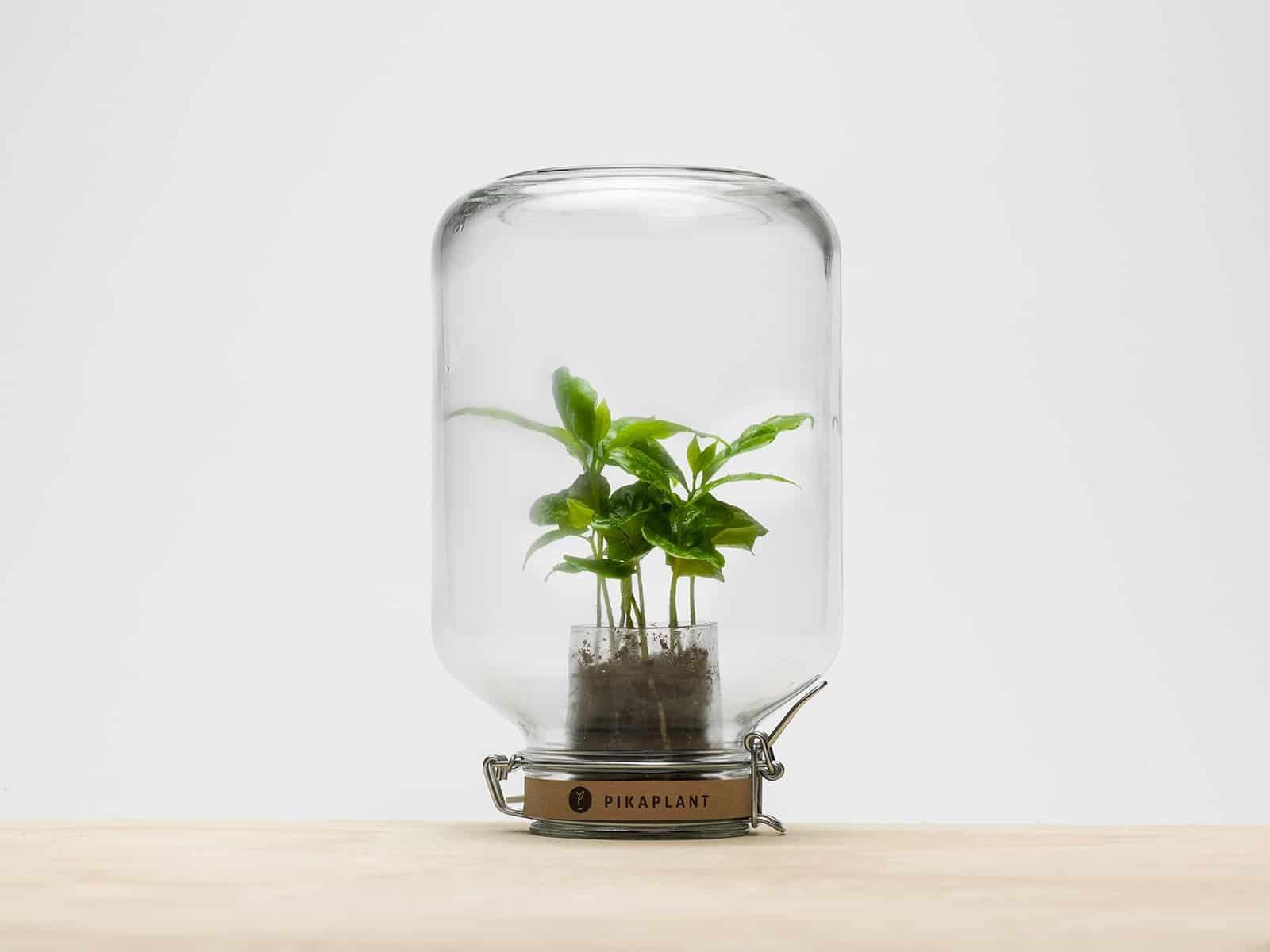 """""""Parce qu'un intérieur vert est un intérieur créatif"""" Pikaplant ! www.soodeco.fr/"""
